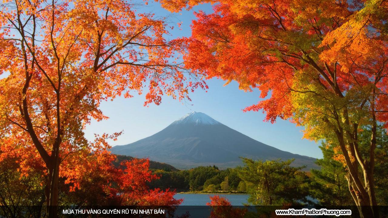 Mùa thu vàng quyến rũ tại Nhật Bản | Khám Phá Bốn Phương