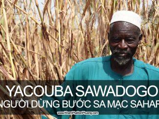 Yacouba Sawadogo, người đàn ông dừng bước sa mạc Sahara, Burkina Faso | Khám Phá Bốn Phương