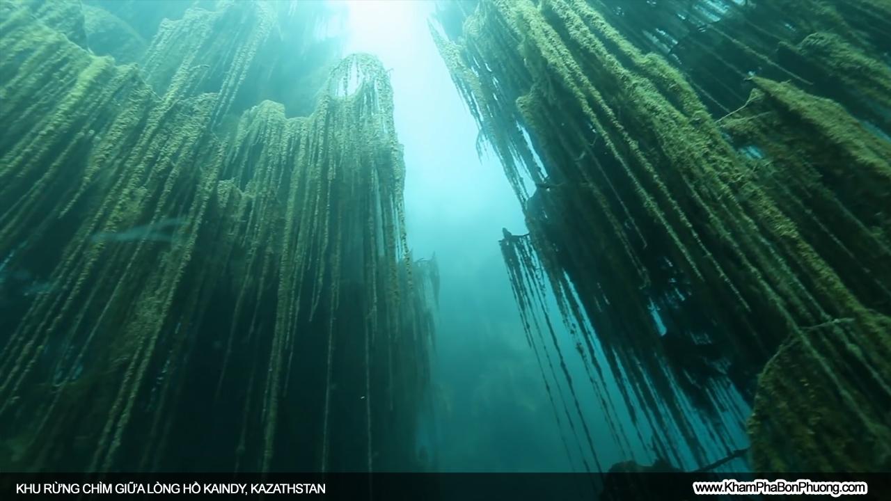 Khu rừng chìm giữa lòng hồ Kaindy, Kazathstan | Khám Phá Bốn Phương