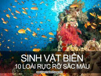 10 loài sinh vật biển rực rỡ sắc màu | Khám Phá Bốn Phương