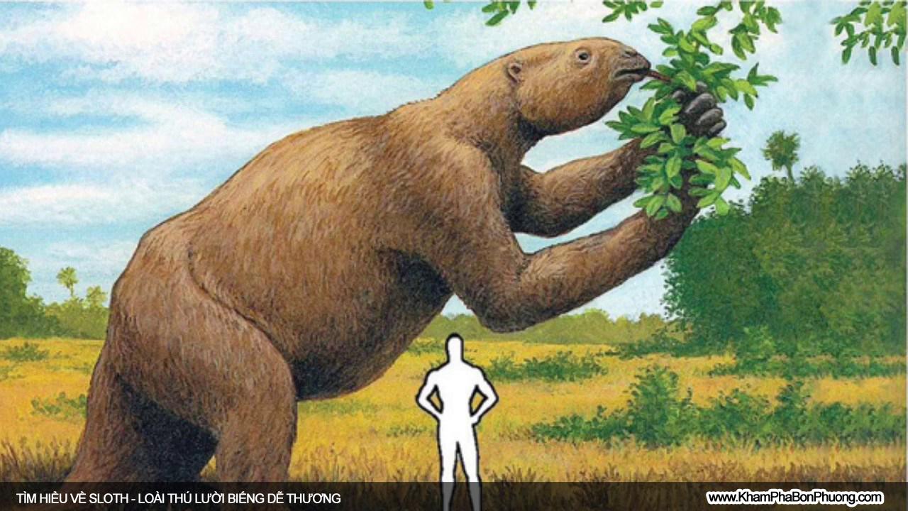 Tìm hiểu 10 điều thú vị về Sloth, loài thú lười biếng dễ thương | Khám Phá Bốn Phương